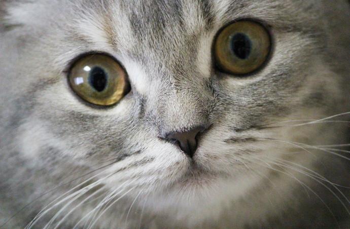2016年秋冬メイクは猫目ブーム再来♡キャットラインをマスターしましょ!