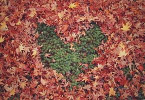 秋はアクティブなデートでしょ!!おすすめデート3選♡