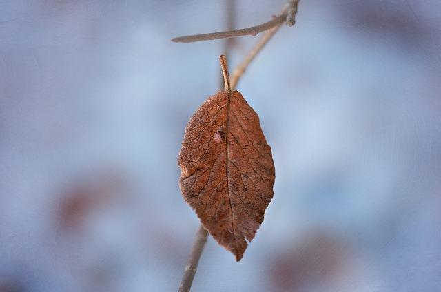 leaf-1222679_640
