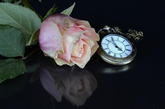 rose-1706447_640